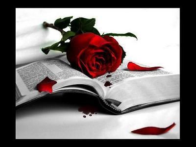 Un libro y una rosa
